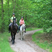 paard14.jpg