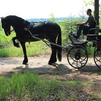 paard7.jpg