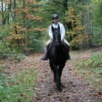 paard2.jpg